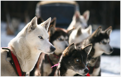 La mirada de estos perros es maravillosa, parecen todo el tiempo estar pensando en algo.
