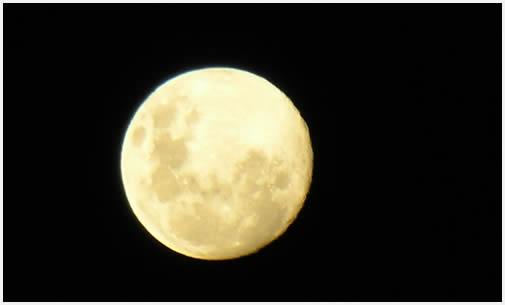 La morfología de la luna se ve perfecta desde la oscuridad de la selva.