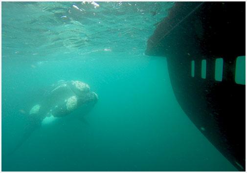 submarino-3