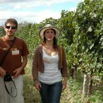 Tour around the vineyards and wineries