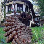 Pine cone and its environment