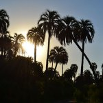 Sunrise at the palm grove