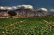 The soils in Cafayate Valle, Salta - Photo: Eduardo Epifanio