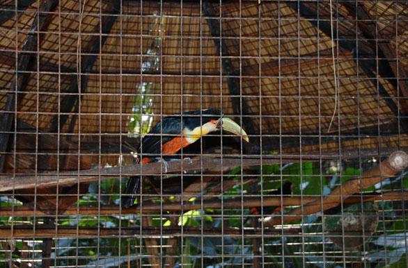 Jard n de los pajaros fotos de ober archivo wa 5246 for Aves de jardin