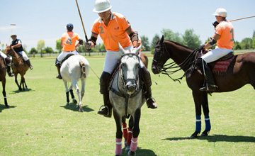 Argentina Polo Day, every day of the year