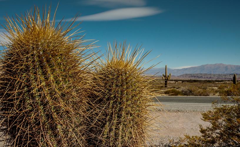 La vegetaci n del norte argentino for Cactus argentina