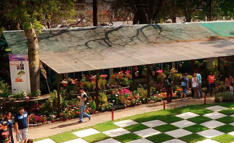 El jard n japon s de buenos aires for Vivero casa jardin