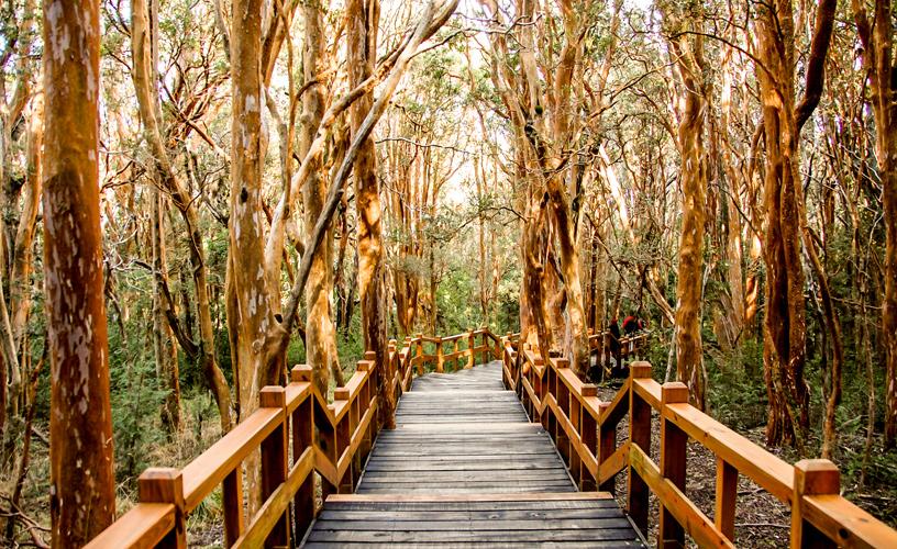 Parque Nacional Los Arrayanes - Villa La Angostura