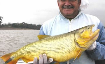 The Largest Dorados in the World