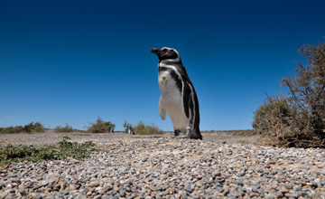 Punta Tombo, Cradle of Penguins
