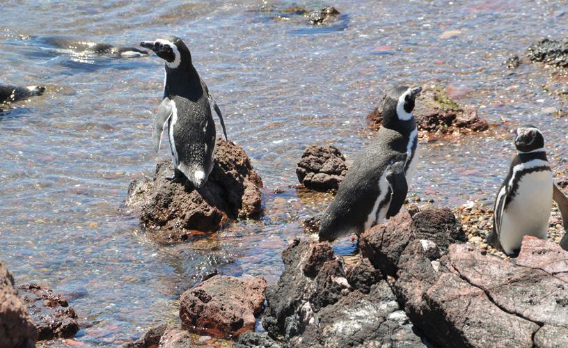 Punta Tombo Penguins from Trelew