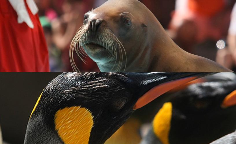 Lobos marinos y pingüinos