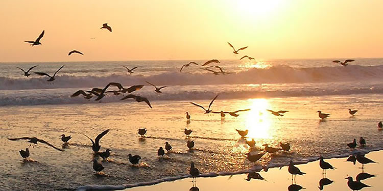 Mar Chiquita Lagoon: Sole fishing in Argentina