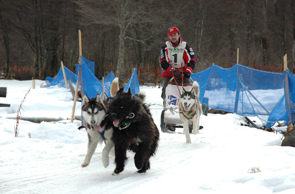 Sled Dog Race - Author: Osvaldo Peralta - Gentileza INFUETUR